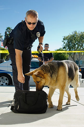 Police Dog Training in Action
